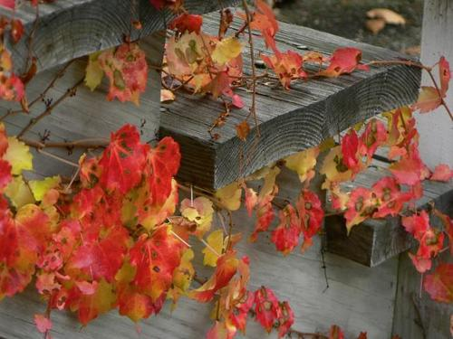 leaves along the stairs