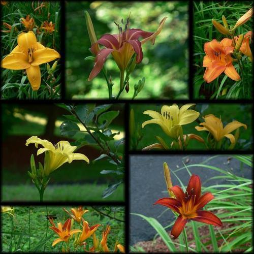 Black_flowers