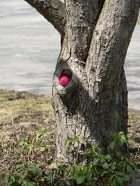 Pink_egg