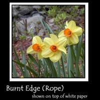 Burnt_edge