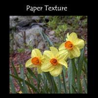 Paper_texture