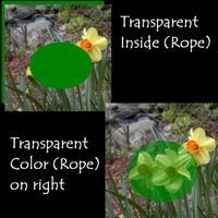 Transparetn_inside_and_color